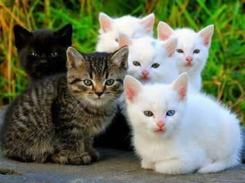 368357-cats-black-and-white-kittens