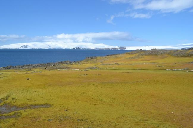 antarctic-moss-e1495201611415