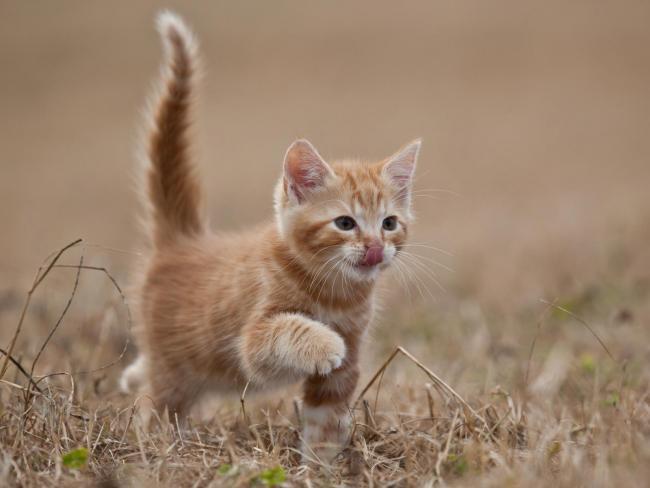 red_kitten-1600x1200