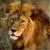 Winged_Lion